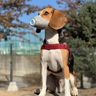 강아지 미세먼지 마스크 (3개입 1세트)