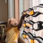 냥캣 트랙볼 고양이 셀프 장난감