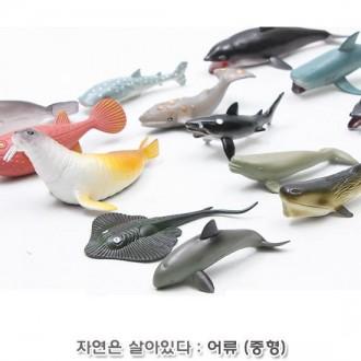 티티모 자연은살아있다-어류탐험 (중형)