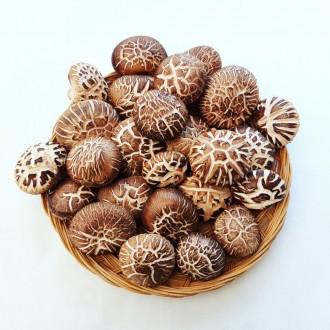 강원도 덕지골 참나무 원목 생 표고 버섯 GAP인증 1kg