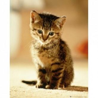 아기고양이 키튼 포스터(40x50cm) MP1705
