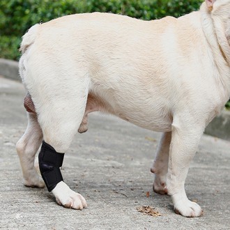 강아지 슬개골 수술 탈골 깁스 보호대 1P