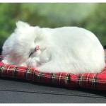KC인증 리얼펫 고양이 미니캣 탈취제 인형 차량용 활성탄