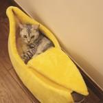 애완견 고양이 집 보금자리 바나나 마약 방석 텐트