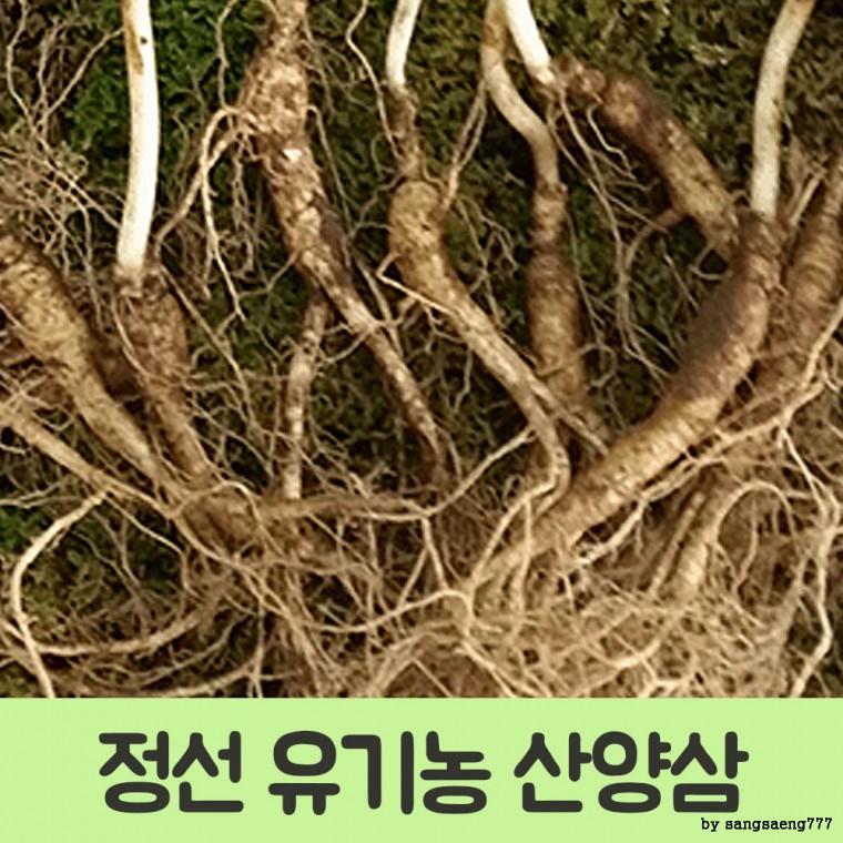 D 정선약초꾼 자연에서 자란 야생 산양삼 10-12년근