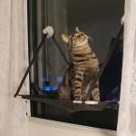 뚜또가또 고양이 윈도우 튼튼 해먹/1단/2단/25kg/뚱냥이