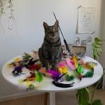 고양이 장난감 3단 2.6미터 낚시대/깃털/68종/균일가